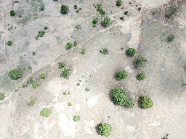 Les communautés frappées par la pauvreté au Ghana restaurent des terres autrefois arides