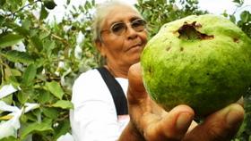 Marina Rosales proudly shows off her organic guavas.  - Edgardo Ayala /IPS