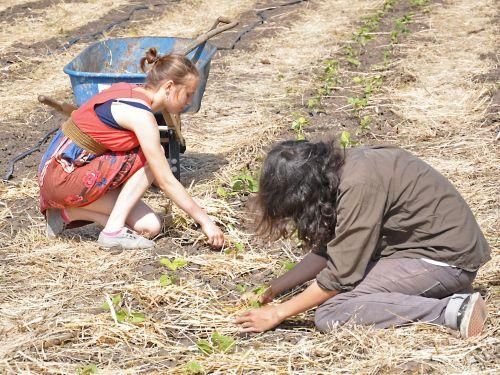 California Occupiers plant crops on an undeveloped 10-acre parcel. - Judith Scherr/IPS