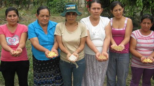 Farmers in Piura display native seeds they preserve.  - Savina Córdova /IPS