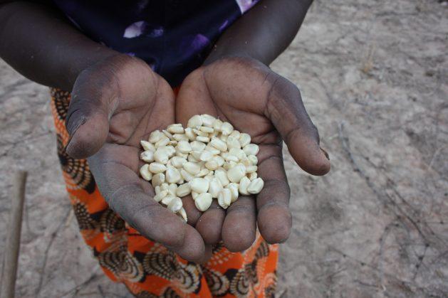 I conflitti minacciano la sicurezza alimentare